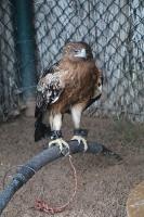Travelnews.lv apmeklē plēsējputnu centru «Kalba Bird of Prey Centre» Šārdžas emirātā. Atbalsta: VisitSharjah.com un Novatours.lv 13