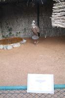 Travelnews.lv apmeklē plēsējputnu centru «Kalba Bird of Prey Centre» Šārdžas emirātā. Atbalsta: VisitSharjah.com un Novatours.lv 19
