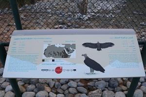 Travelnews.lv apmeklē plēsējputnu centru «Kalba Bird of Prey Centre» Šārdžas emirātā. Atbalsta: VisitSharjah.com un Novatours.lv 22
