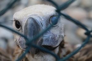 Travelnews.lv apmeklē plēsējputnu centru «Kalba Bird of Prey Centre» Šārdžas emirātā. Atbalsta: VisitSharjah.com un Novatours.lv 25
