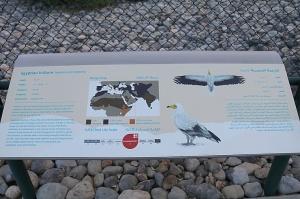 Travelnews.lv apmeklē plēsējputnu centru «Kalba Bird of Prey Centre» Šārdžas emirātā. Atbalsta: VisitSharjah.com un Novatours.lv 29