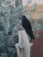 Travelnews.lv apmeklē plēsējputnu centru «Kalba Bird of Prey Centre» Šārdžas emirātā. Atbalsta: VisitSharjah.com un Novatours.lv 30