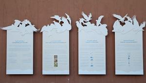 Travelnews.lv apmeklē plēsējputnu centru «Kalba Bird of Prey Centre» Šārdžas emirātā. Atbalsta: VisitSharjah.com un Novatours.lv 39