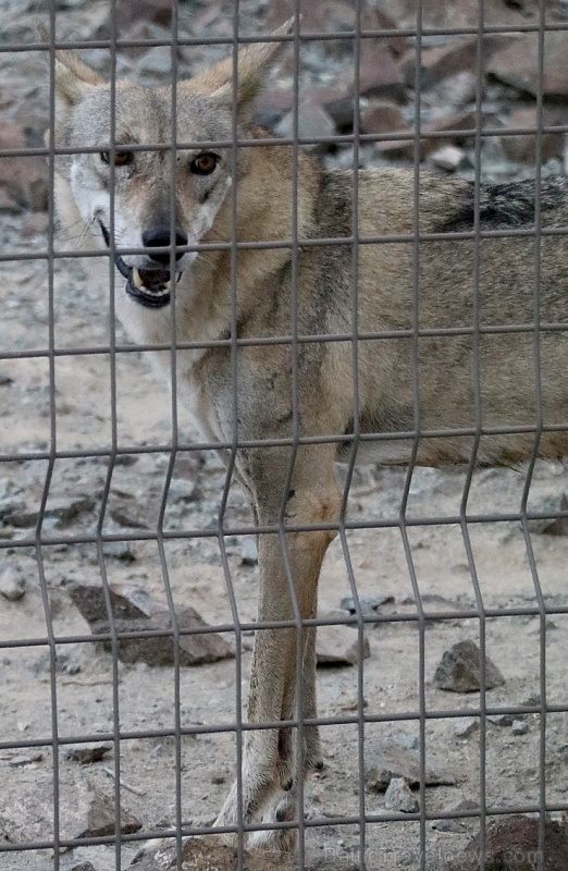 Travelnews.lv apmeklē dabas aizsardzības centru «Al Hefaiyah Mountain Conservation Centre». Atbalsta: VisitSharjah.com un Novatours.lv