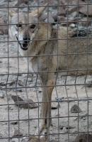 Travelnews.lv apmeklē dabas aizsardzības centru «Al Hefaiyah Mountain Conservation Centre». Atbalsta: VisitSharjah.com un Novatours.lv 6