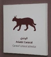 Travelnews.lv apmeklē dabas aizsardzības centru «Al Hefaiyah Mountain Conservation Centre». Atbalsta: VisitSharjah.com un Novatours.lv 8