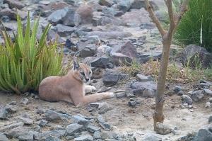 Travelnews.lv apmeklē dabas aizsardzības centru «Al Hefaiyah Mountain Conservation Centre». Atbalsta: VisitSharjah.com un Novatours.lv 9