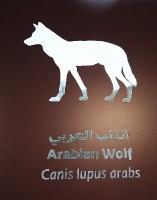 Travelnews.lv apmeklē dabas aizsardzības centru «Al Hefaiyah Mountain Conservation Centre». Atbalsta: VisitSharjah.com un Novatours.lv 11
