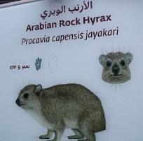Travelnews.lv apmeklē dabas aizsardzības centru «Al Hefaiyah Mountain Conservation Centre». Atbalsta: VisitSharjah.com un Novatours.lv 13
