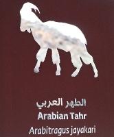 Travelnews.lv apmeklē dabas aizsardzības centru «Al Hefaiyah Mountain Conservation Centre». Atbalsta: VisitSharjah.com un Novatours.lv 18