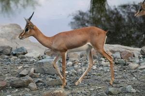 Travelnews.lv apmeklē dabas aizsardzības centru «Al Hefaiyah Mountain Conservation Centre». Atbalsta: VisitSharjah.com un Novatours.lv 20