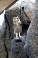 Travelnews.lv apmeklē dabas aizsardzības centru «Al Hefaiyah Mountain Conservation Centre». Atbalsta: VisitSharjah.com un Novatours.lv 21