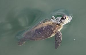 Travelnews.lv ar nakšņojumu iepazīst burvīgu vietu uz salas «Kingfisher Lodge». Atbalsta: VisitSharjah.com un Novatours.lv 64
