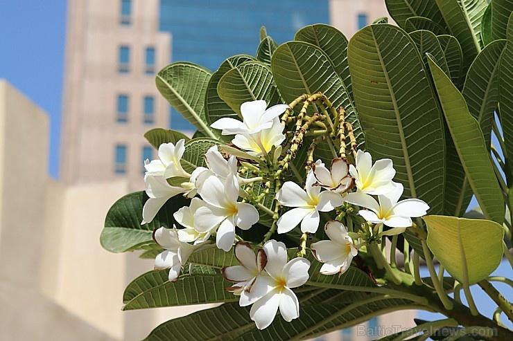 Travelnews.lv iepazīst premium klases viesnīcu «Al Bait Sharjah» Šārdžā. Atbalsta: VisitSharjah.com un Novatours.lv