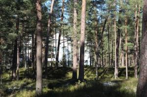 Ragakāpas dabas parkā Jūrmalā mostas pavasaris 2