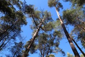 Ragakāpas dabas parkā Jūrmalā mostas pavasaris
