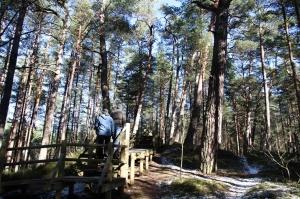 Ragakāpas dabas parkā Jūrmalā mostas pavasaris 6
