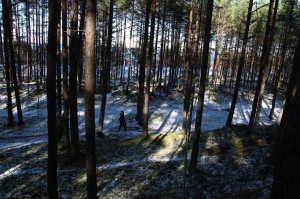 Ragakāpas dabas parkā Jūrmalā mostas pavasaris 8