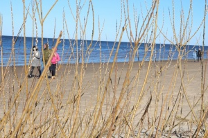 Ragakāpas dabas parkā Jūrmalā mostas pavasaris 12
