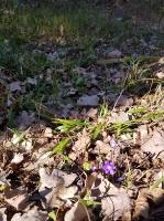 Staigājot pa taku, ir iespējams aplūkot augu, sūnu, ķērpju un kukaiņu daudzveidību, dižkokus, Jāņupītes stāvkrastu, kā arī novērtēt 2005. gada orkāna