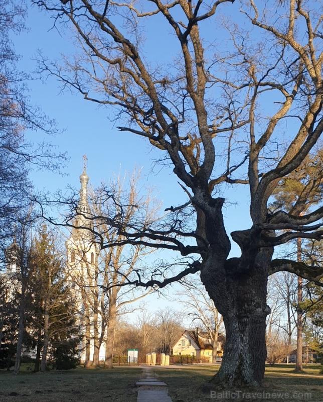 Gulbenes novadā notverti saulaini pavasara mirkļi