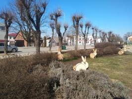 Gulbenes novadā notverti saulaini pavasara mirkļi 2