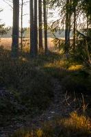 Gulbenes novadā notverti saulaini pavasara mirkļi 17