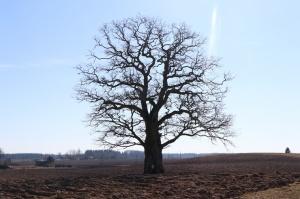 Gulbenes novadā notverti saulaini pavasara mirkļi 18