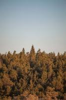 Lielo Ķemeru tīreli saullēktā pielej silti gaismas stari 11