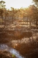 Lielo Ķemeru tīreli saullēktā pielej silti gaismas stari 22