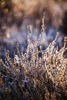 Lielo Ķemeru tīreli saullēktā pielej silti gaismas stari 23