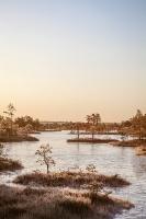 Lielo Ķemeru tīreli saullēktā pielej silti gaismas stari 25