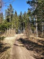 Dobeles pusē, ievērojot valstī noteiktos drošības nosacījumus, var baudīt pavasarīgas pastaigas 10