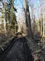 Dobeles pusē, ievērojot valstī noteiktos drošības nosacījumus, var baudīt pavasarīgas pastaigas 22