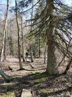Dobeles pusē, ievērojot valstī noteiktos drošības nosacījumus, var baudīt pavasarīgas pastaigas 28