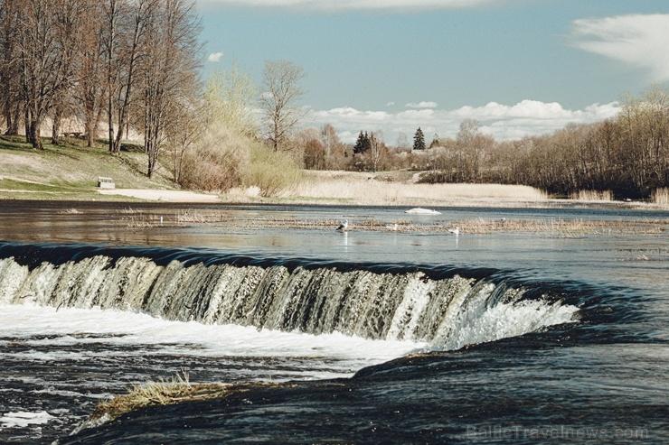 Kuldīgā plauks pavasaris un virs Ventas rumbas, mugurām zaigojot, lido zivis 281967