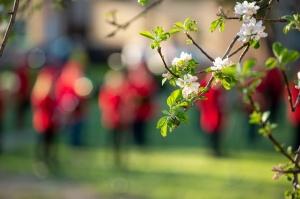Rēzeknes pagalmos skan muzikāli pārsteigumi pilsētas iedzīvotājiem un viesiem 26
