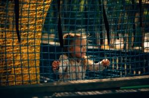 Valmieras Sajūtu parkā atver Tīklu kubu 2