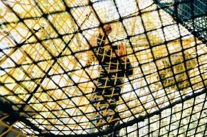Valmieras Sajūtu parkā atver Tīklu kubu 4