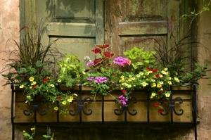 Valmieru vasaras pilnbriedā izdaiļo krāšņākie ziedi 1