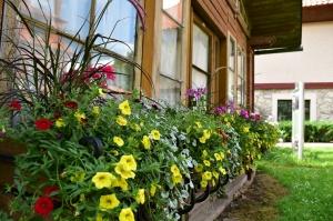 Valmieru vasaras pilnbriedā izdaiļo krāšņākie ziedi 4