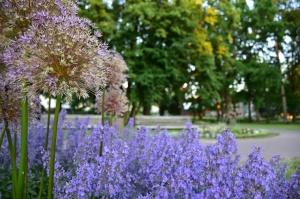 Valmieru vasaras pilnbriedā izdaiļo krāšņākie ziedi 5