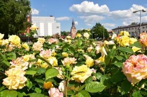 Valmieru vasaras pilnbriedā izdaiļo krāšņākie ziedi 14