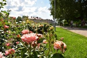 Valmieru vasaras pilnbriedā izdaiļo krāšņākie ziedi 15