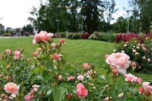 Valmieru vasaras pilnbriedā izdaiļo krāšņākie ziedi 16