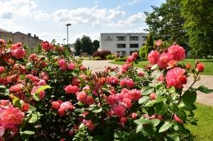 Valmieru vasaras pilnbriedā izdaiļo krāšņākie ziedi 18