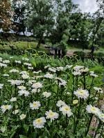 Valmieru vasaras pilnbriedā izdaiļo krāšņākie ziedi 20