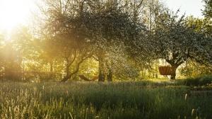Jaunmoku pilī notverti pasakaini saullēkta mirkļi 13