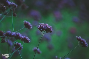 Fotogrāfs Māris Stiprais piefiksē rudenīgās noskaņas Madonā 9