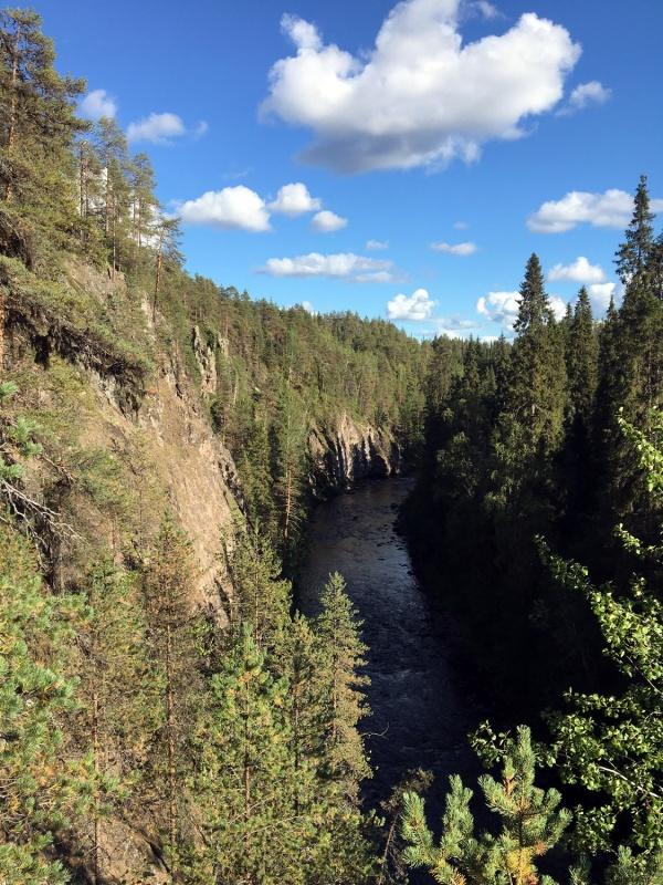 Oulanka kanjona sienas 291231